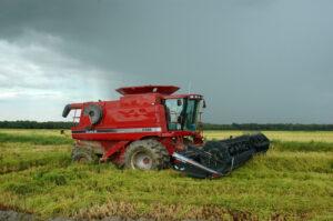 rainy louisiana harvest