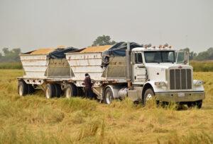 CA rice truck