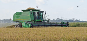 mowata, la, rice harvest