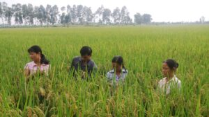 vietnam farmers