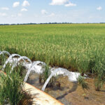MIRImultiple-inlet rice irrigation